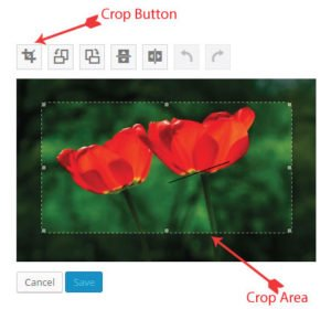 crop image button in wordpress