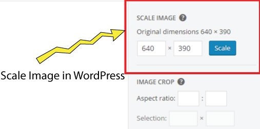scale image in wordpress
